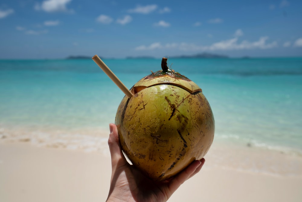 person holding coconut fruit during daytime