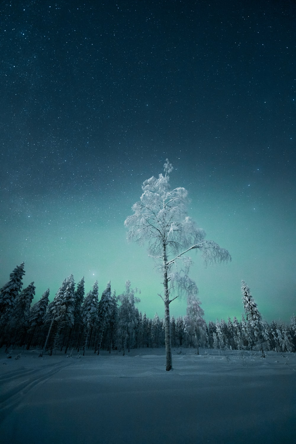 green trees under blue sky during night time
