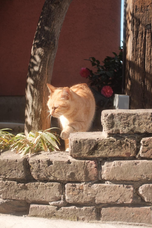 orange tabby cat on gray concrete blocks
