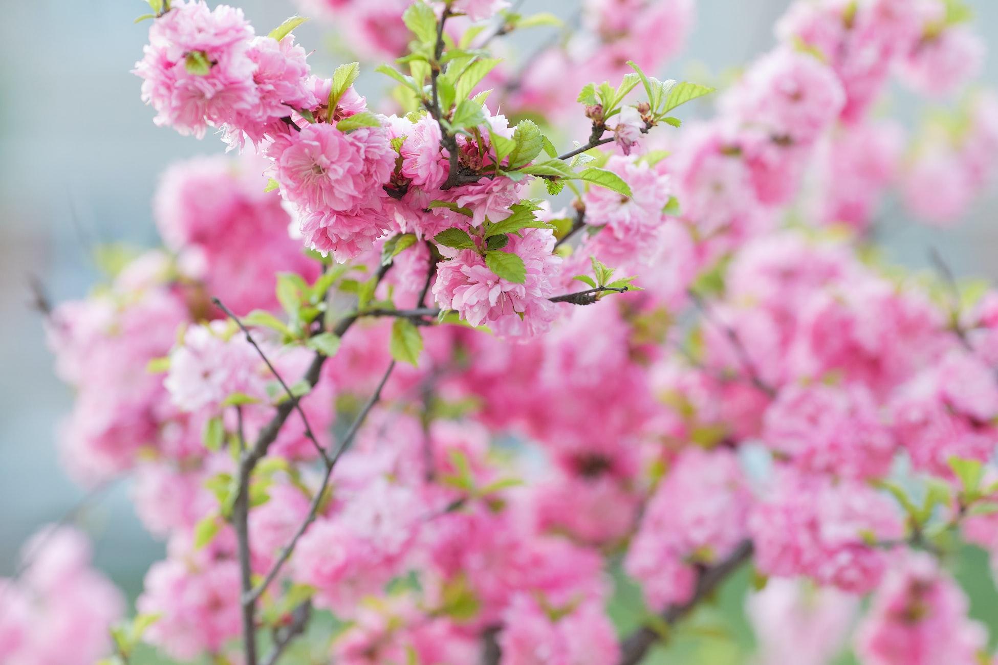 Абстрактный бесплатный фон с нежными розовыми цветами
