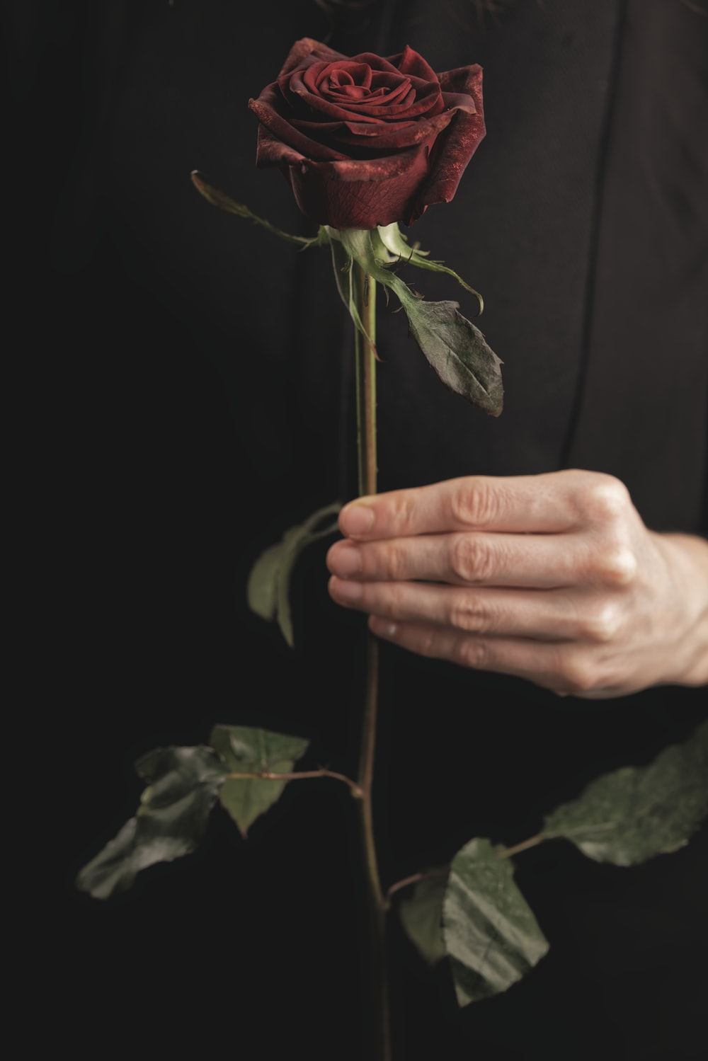 person holding red rose in dark room