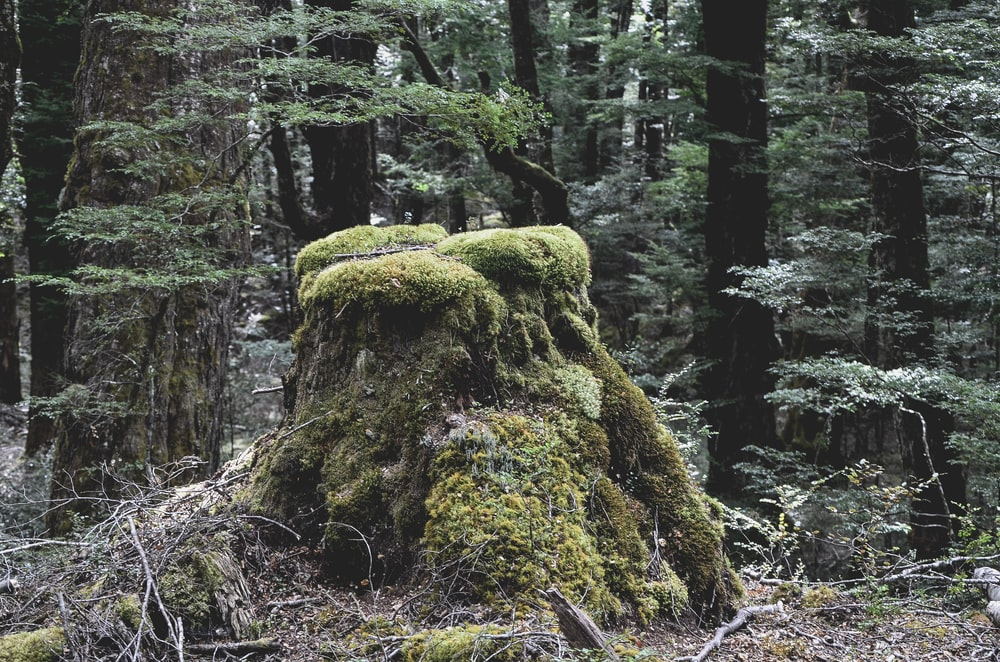 brown and green rock formation in forest during daytime