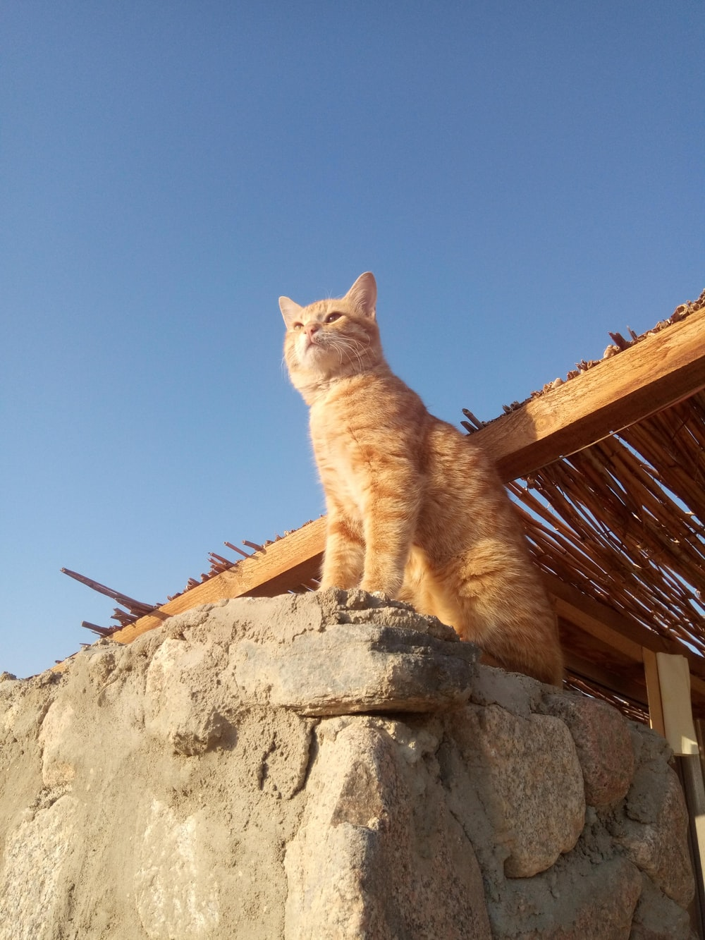 orange tabby cat on gray concrete wall during daytime