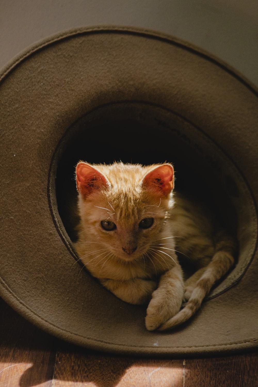 brown tabby cat on black car wheel