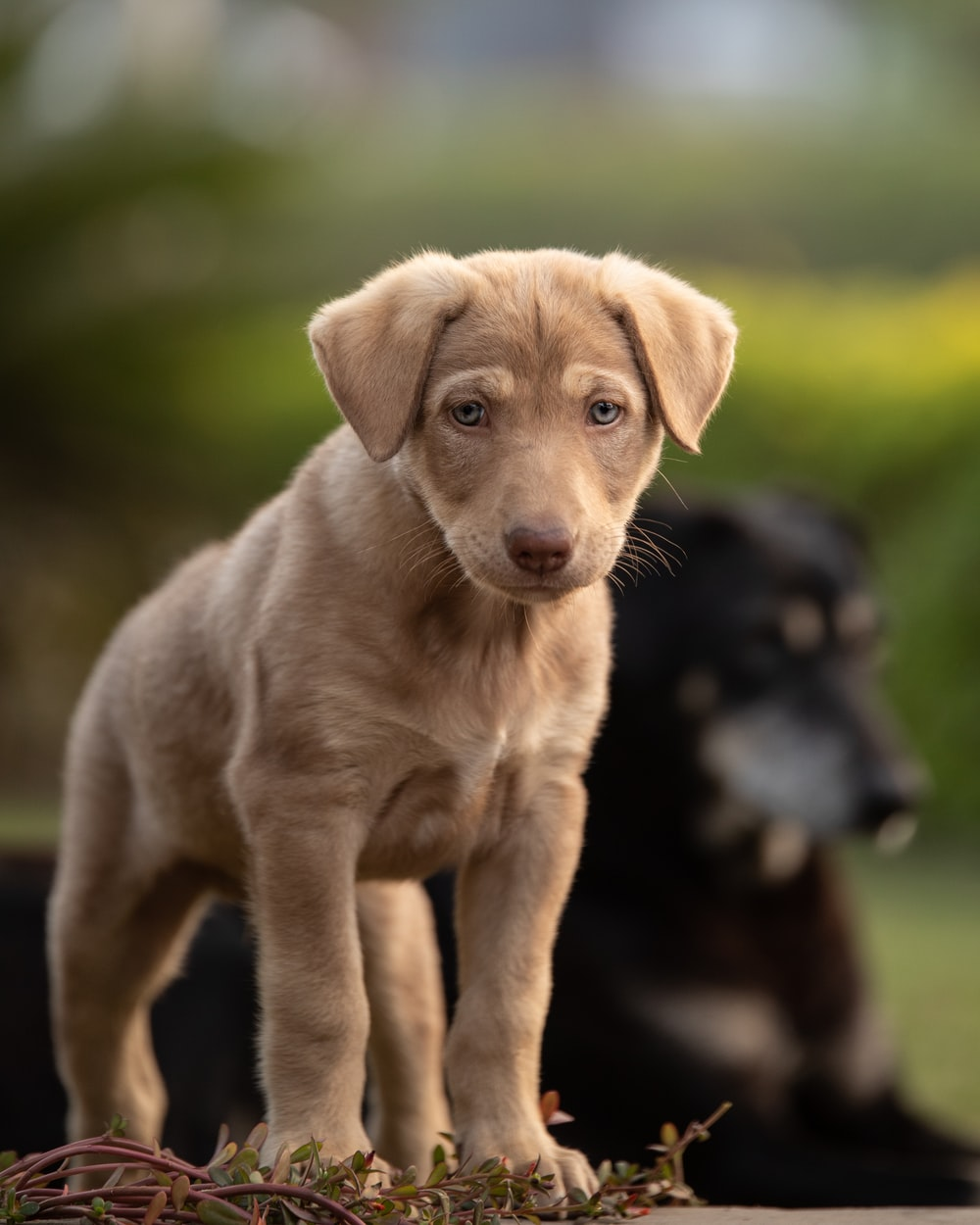 brown short coated puppy on green grass during daytime