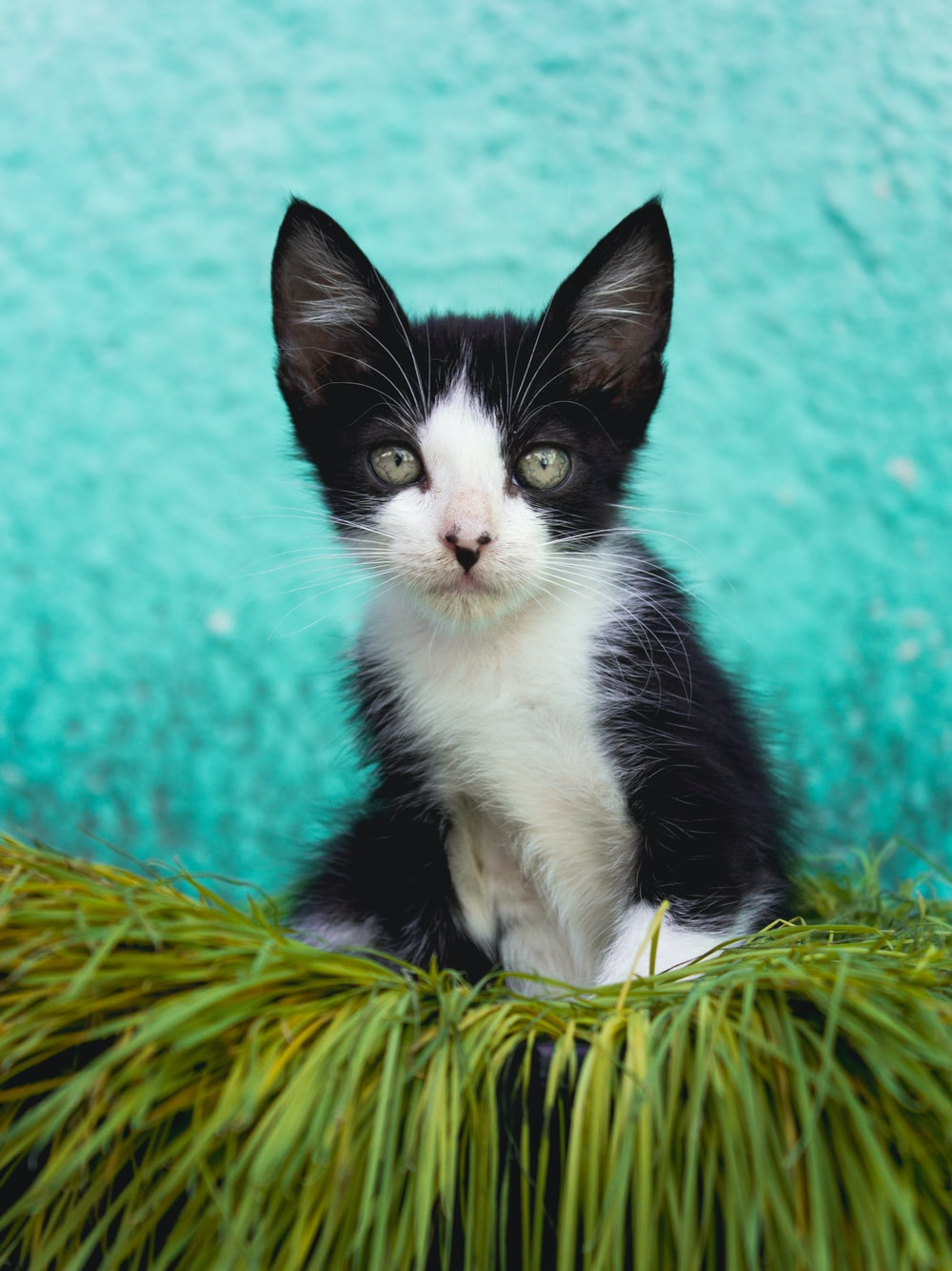 tuxedo cat on green and brown wicker basket