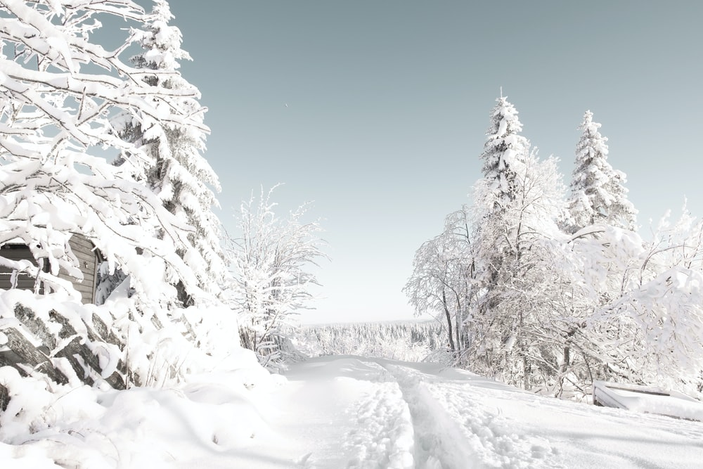 snow covered trees under blue sky during daytime