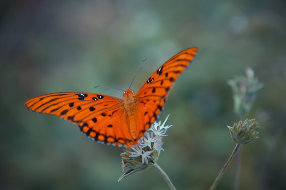 orange and black butterfly perched on white flower