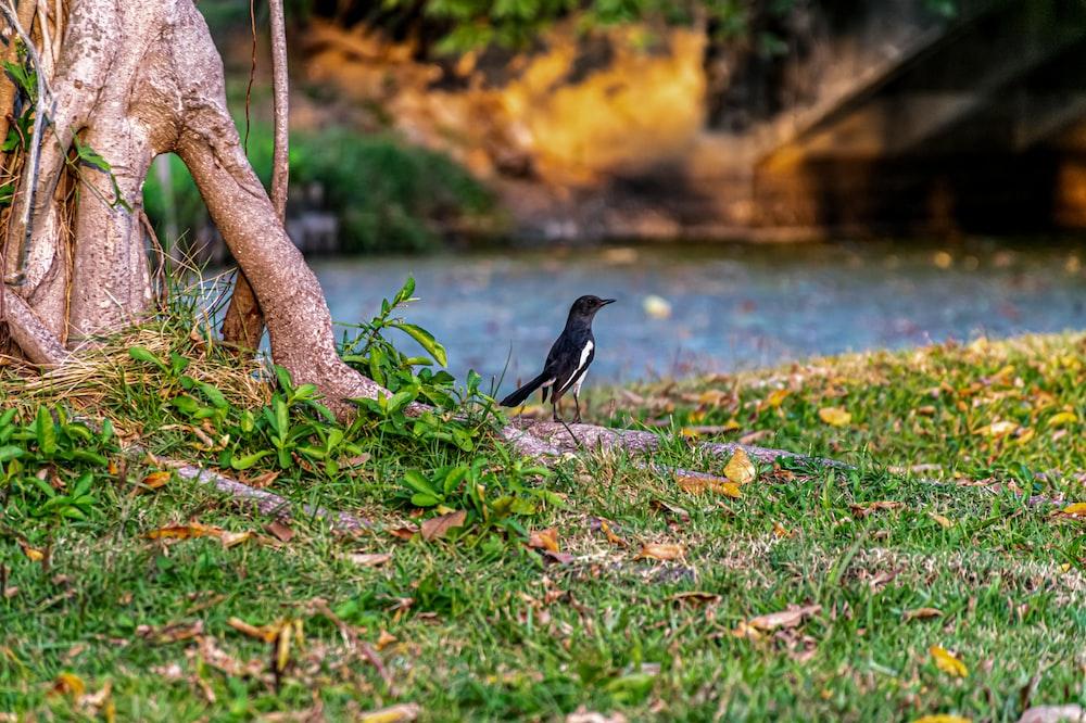black bird on tree branch near body of water during daytime