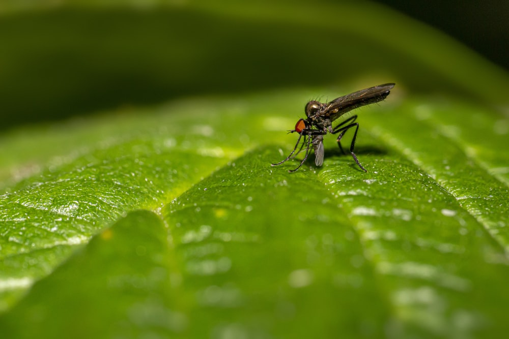 black fly perched on green leaf in close up photography