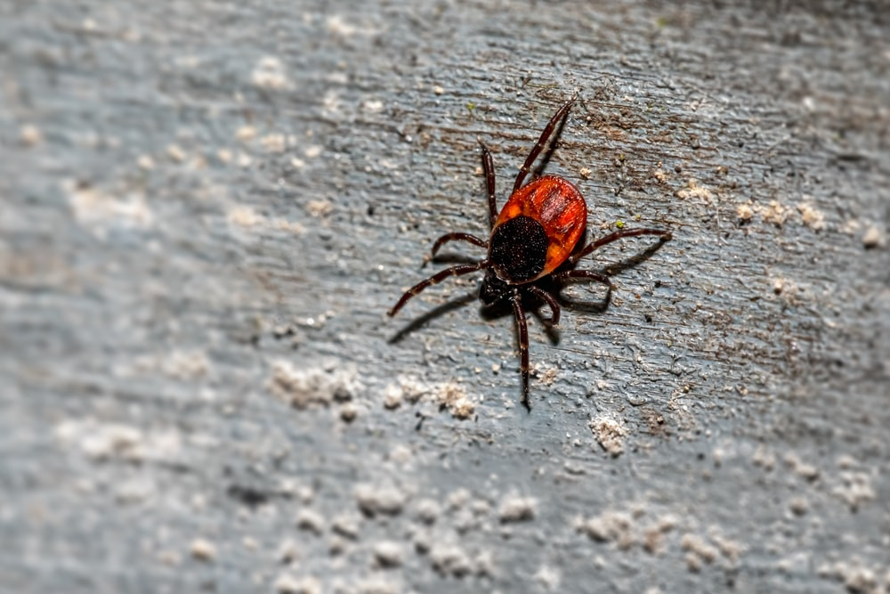 black and brown spider on ground