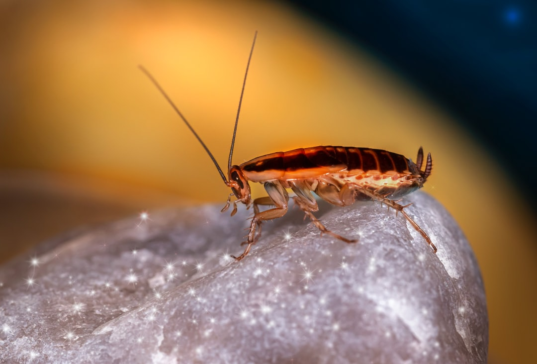 Call Pest Control: The Early Warning Signs of Bed Bugs