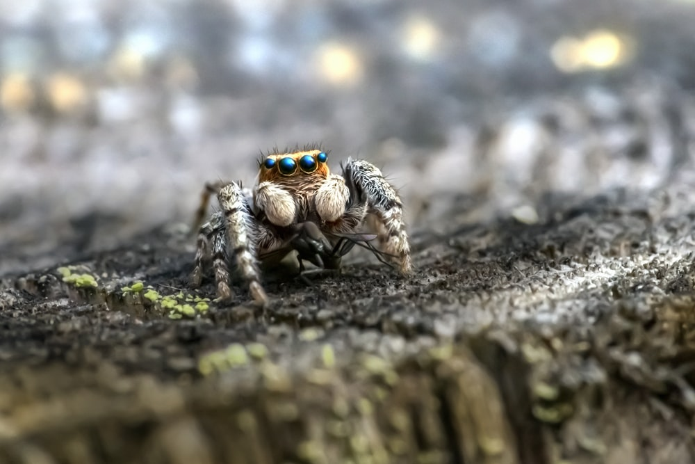 black and brown spider on brown wood