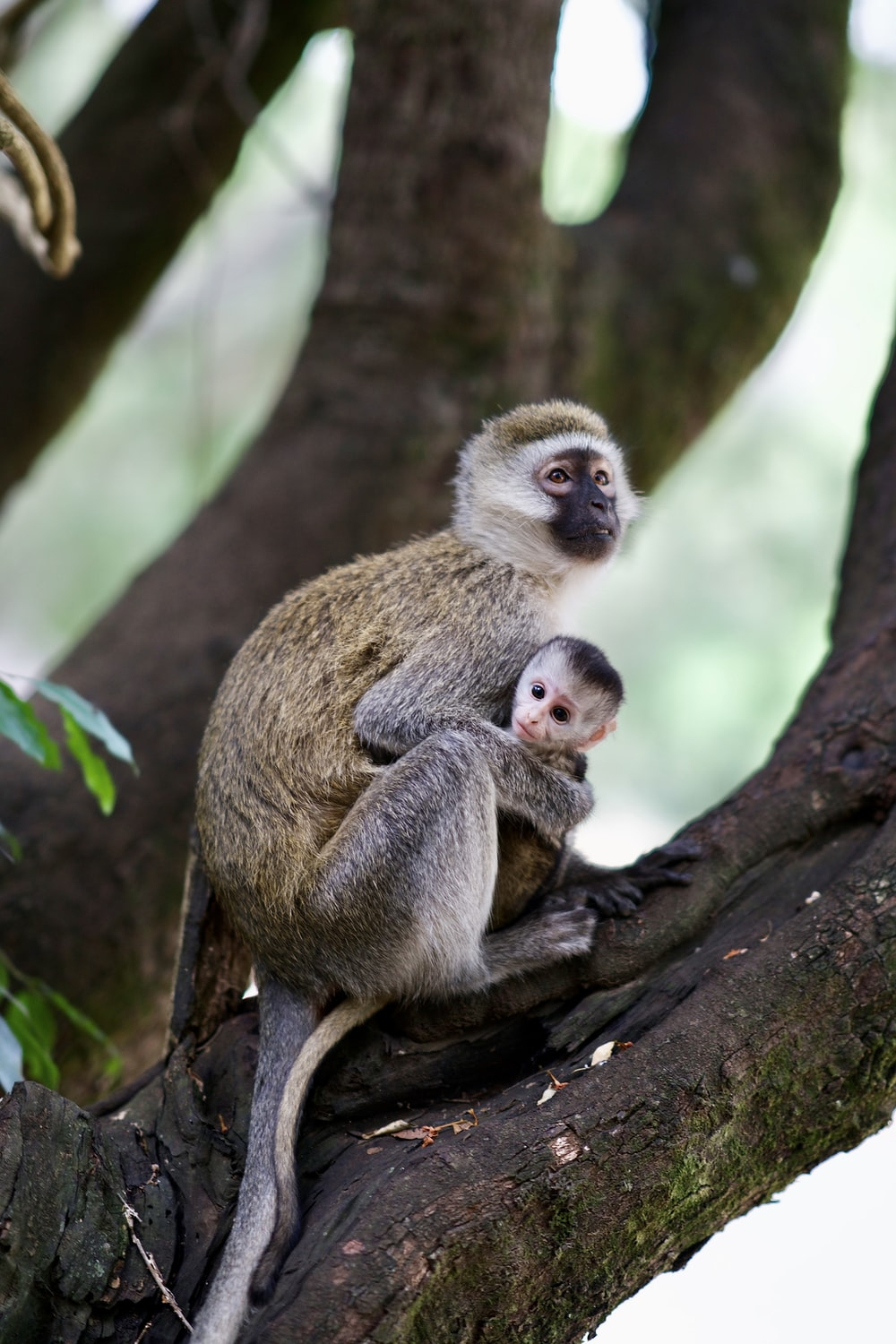two monkeys on tree branch during daytime