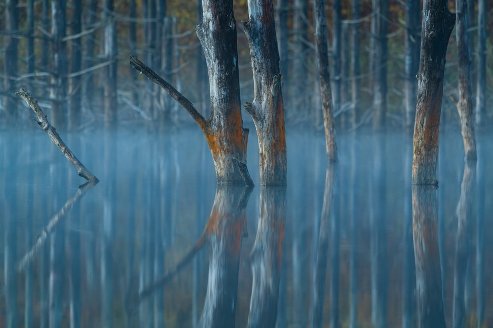 leafless tree on body of water