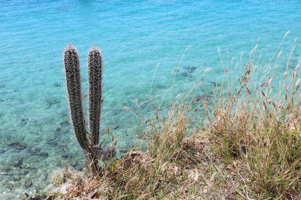 brown cactus near body of water during daytime