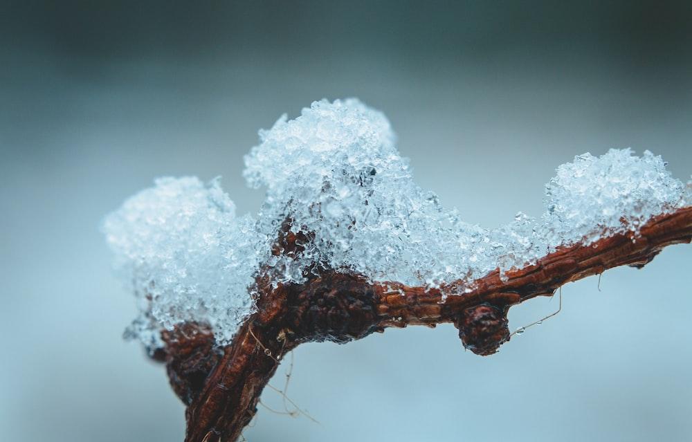 white ice on brown stem