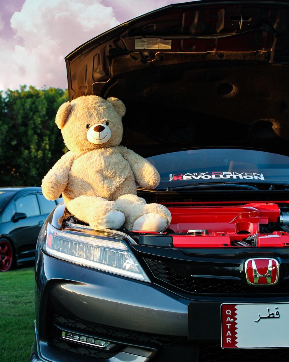 brown teddy bear on car