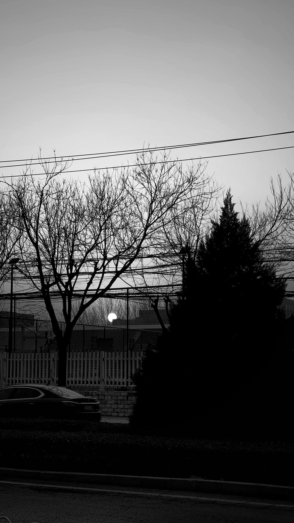 grayscale photo of bare trees