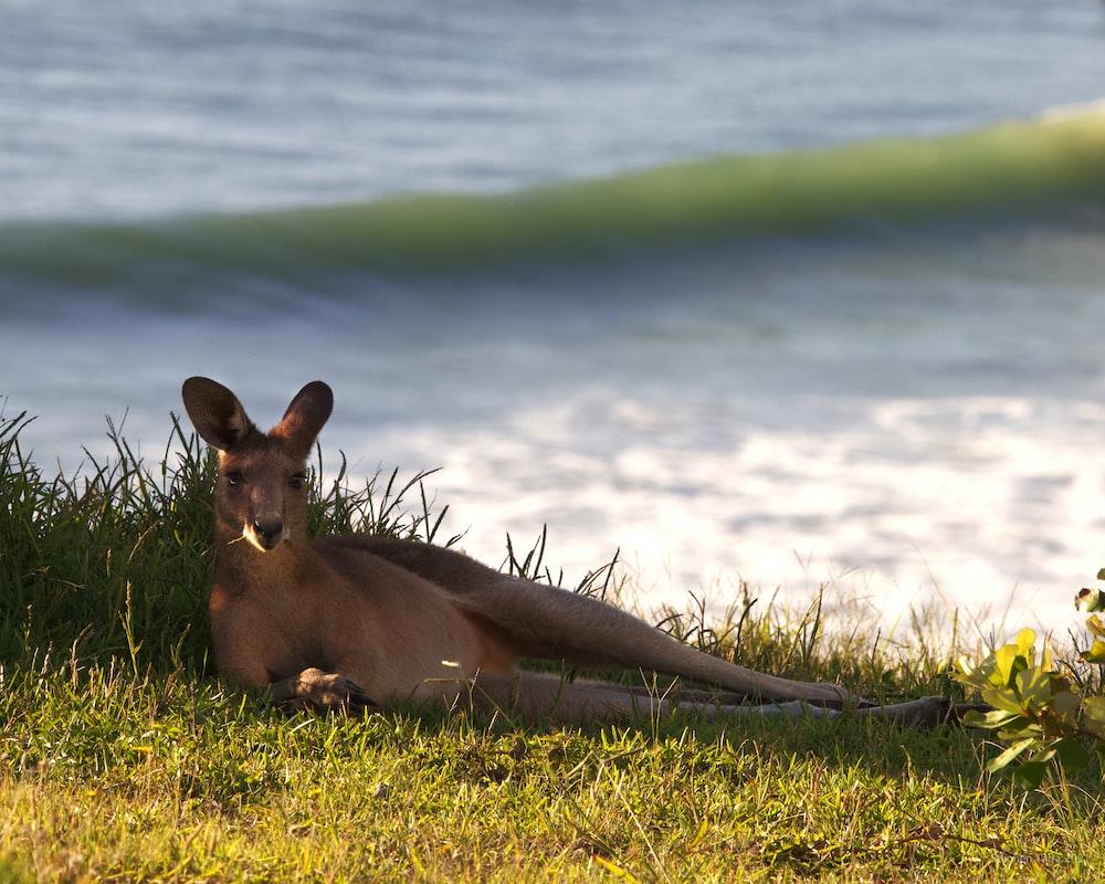 A deer near the beach