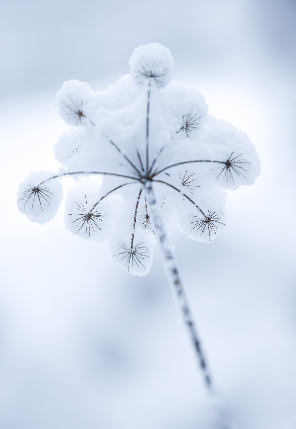 white flower in close up photography