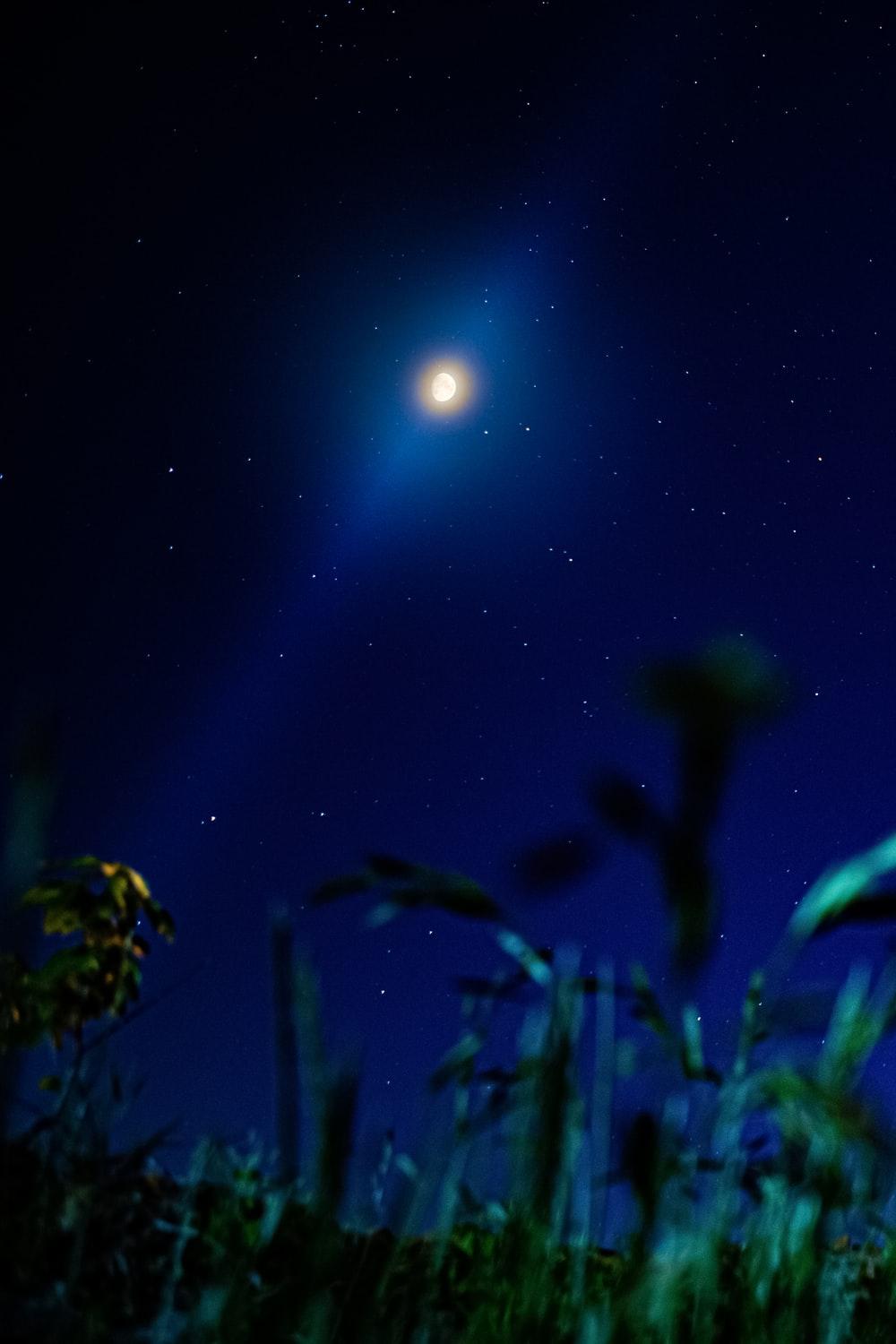 green plant under blue sky during nighttime