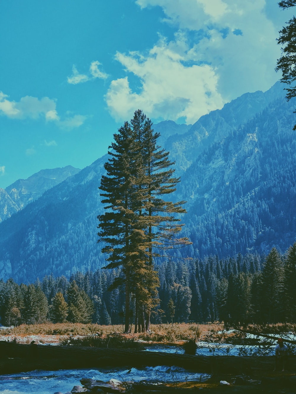 green pine tree on brown grass field near mountain under blue and white cloudy sky during