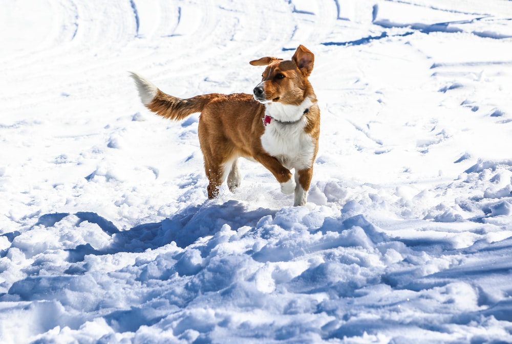 brown and white short coated dog on snow covered ground during daytime