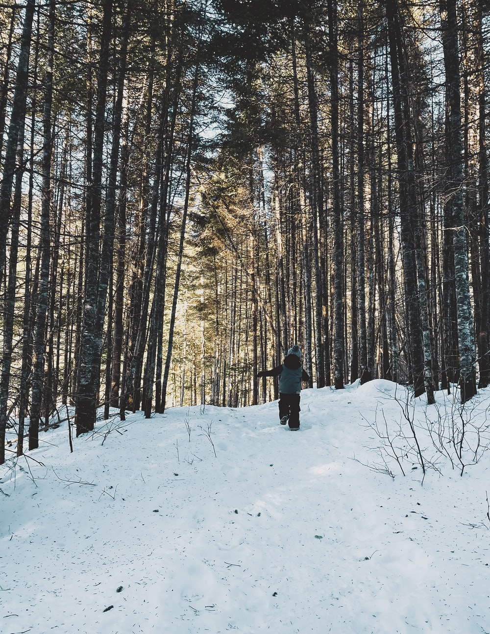 person in black jacket standing on snow covered ground near trees during daytime