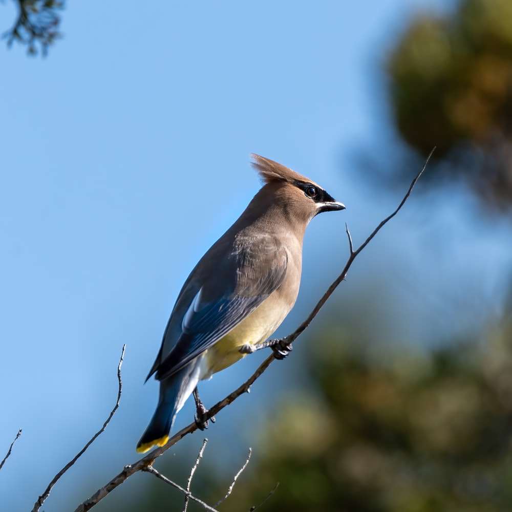 blue and white bird perched on tree branch