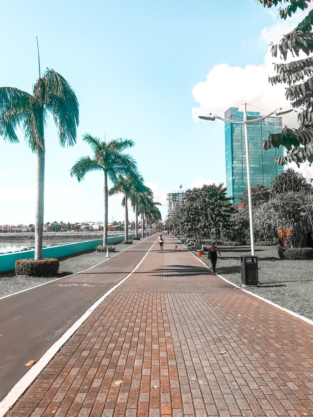 gray concrete road between green palm trees during daytime