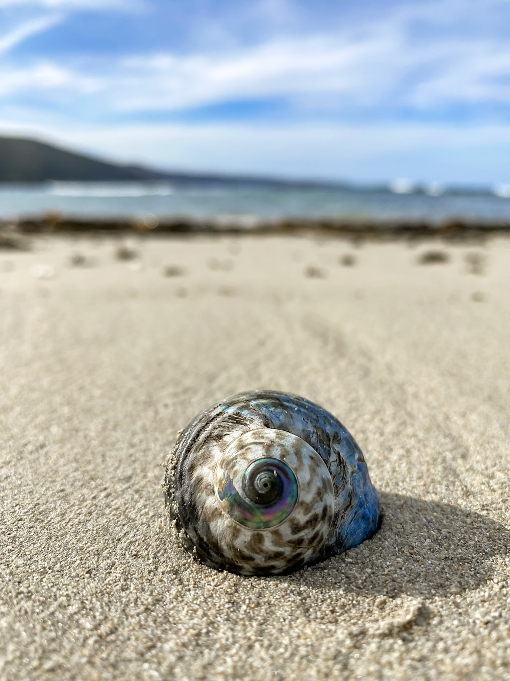 blue and white sea shell on brown sand during daytime