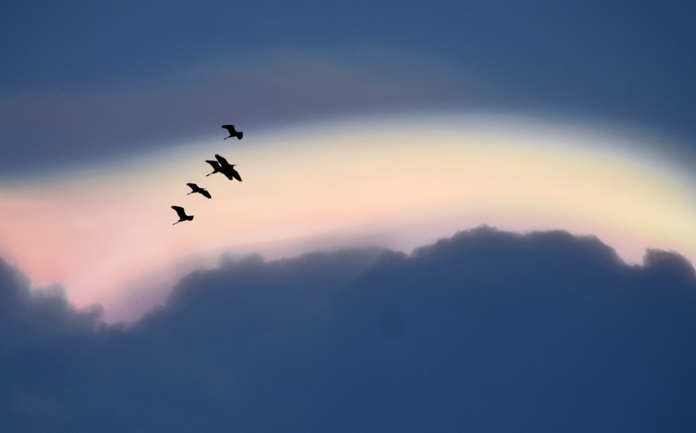 birds flying over the clouds during daytime
