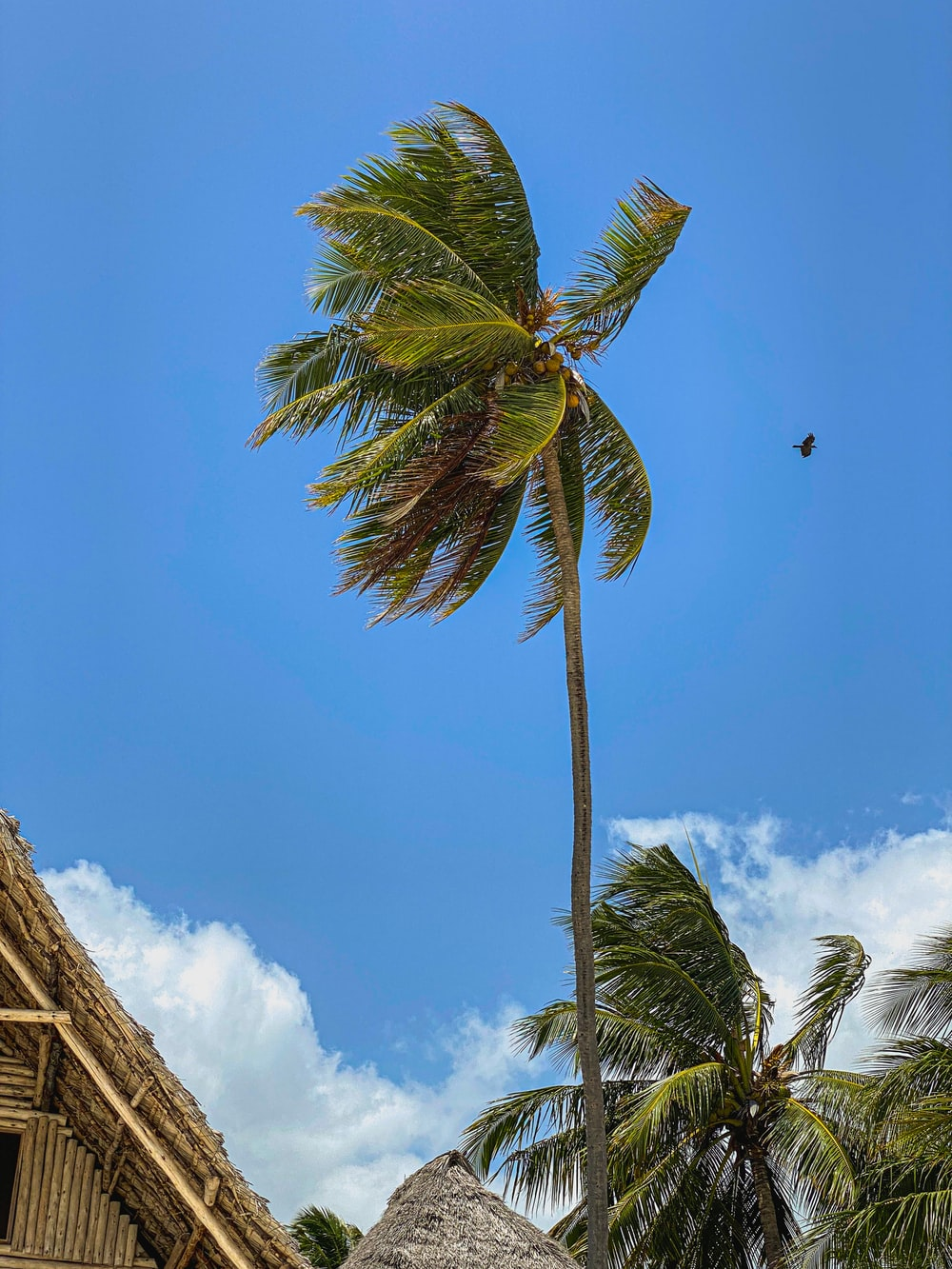 low angle photography of palm tree under blue sky during daytime