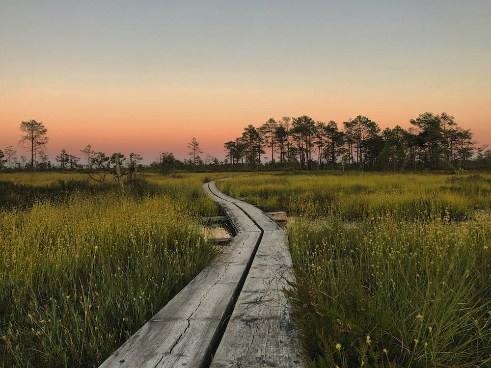 gray wooden pathway between green grass field during sunset