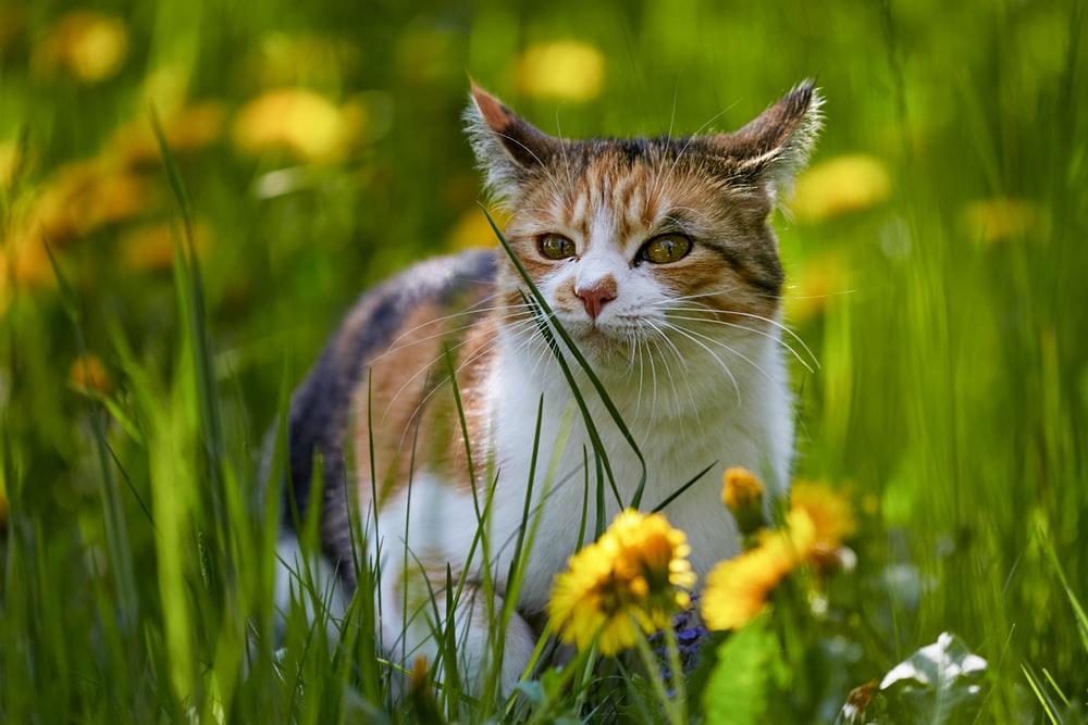 white brown and black cat on yellow flower field during daytime