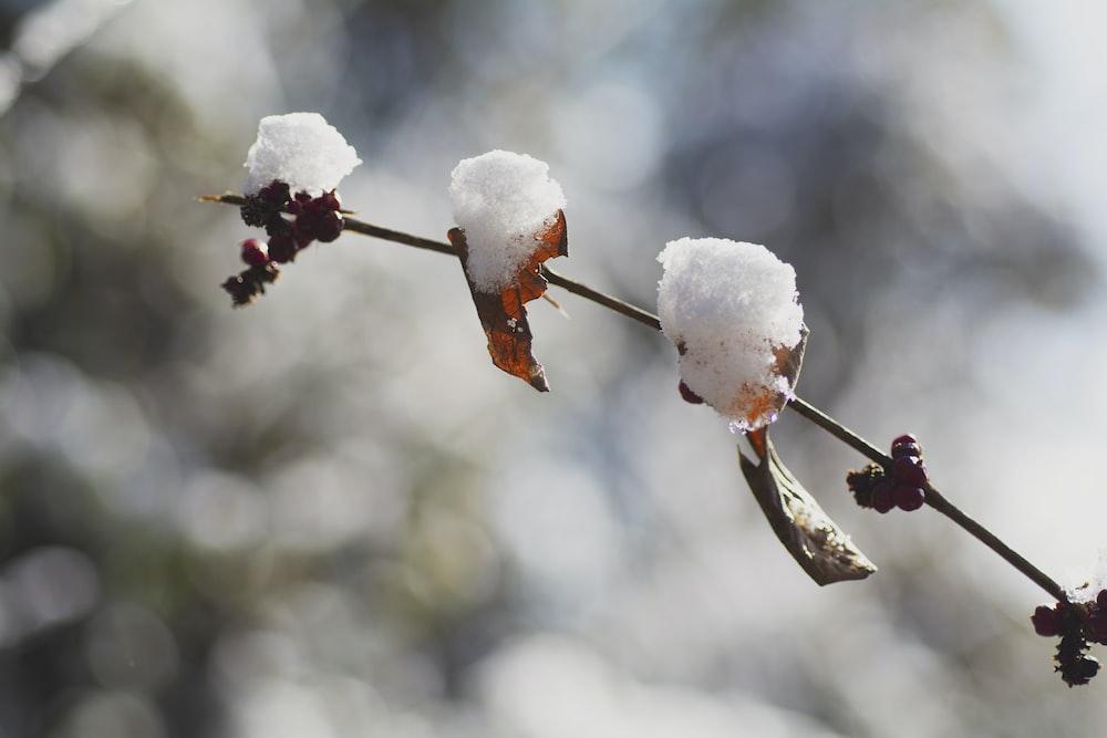 white ice on brown stick