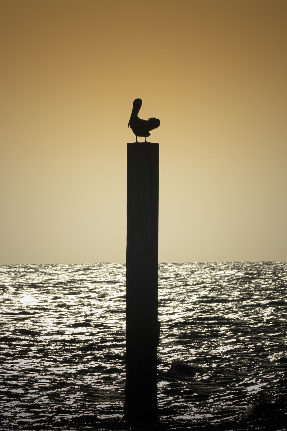 silhouette of bird on post during sunset