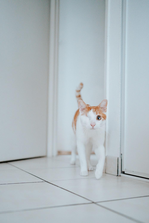 white and orange cat on white floor tiles