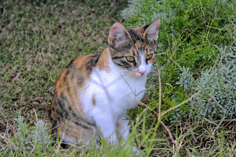 calico cat on green grass during daytime