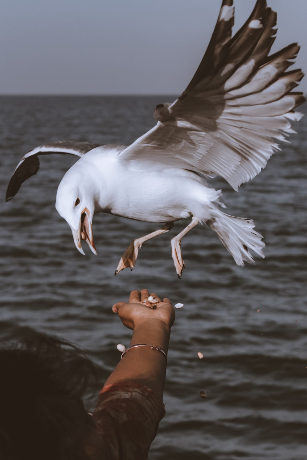 white bird on persons hand