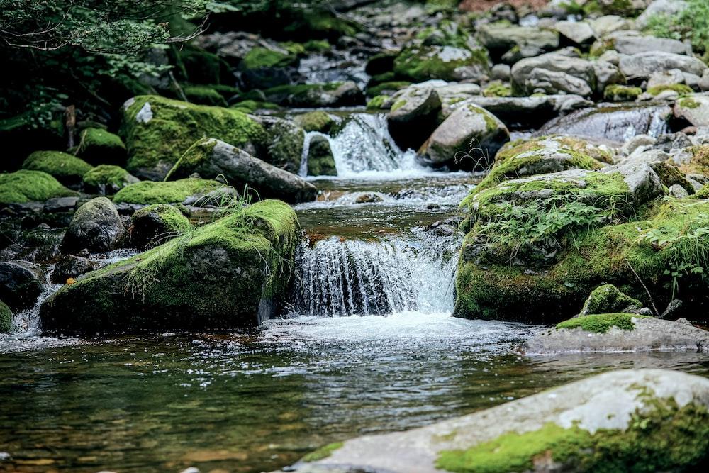 green moss on gray rocks in river