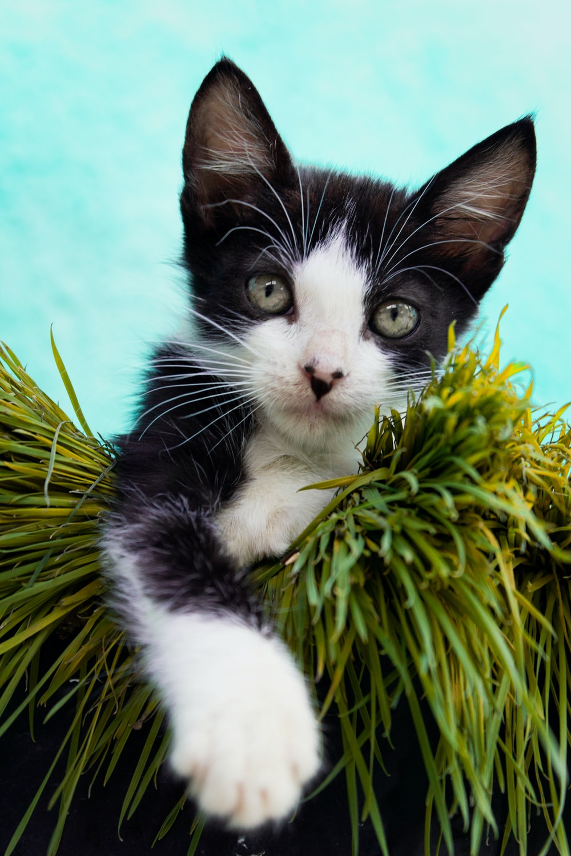 tuxedo cat on green plant