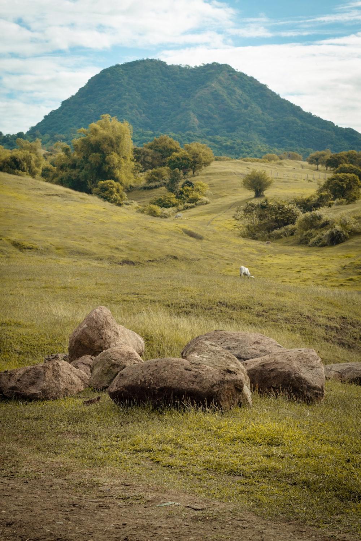 white bird on brown rock near green grass field during daytime