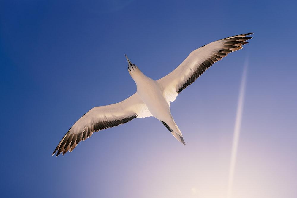 white bird flying in the sky