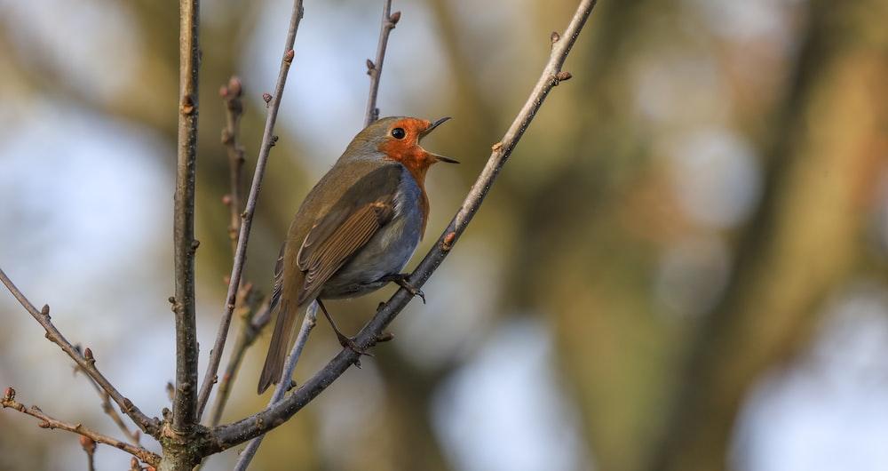 brown and orange bird on tree branch