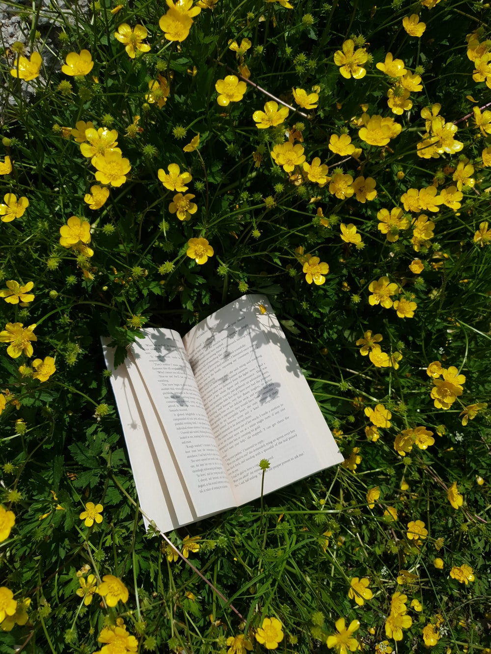 white book on yellow flowers