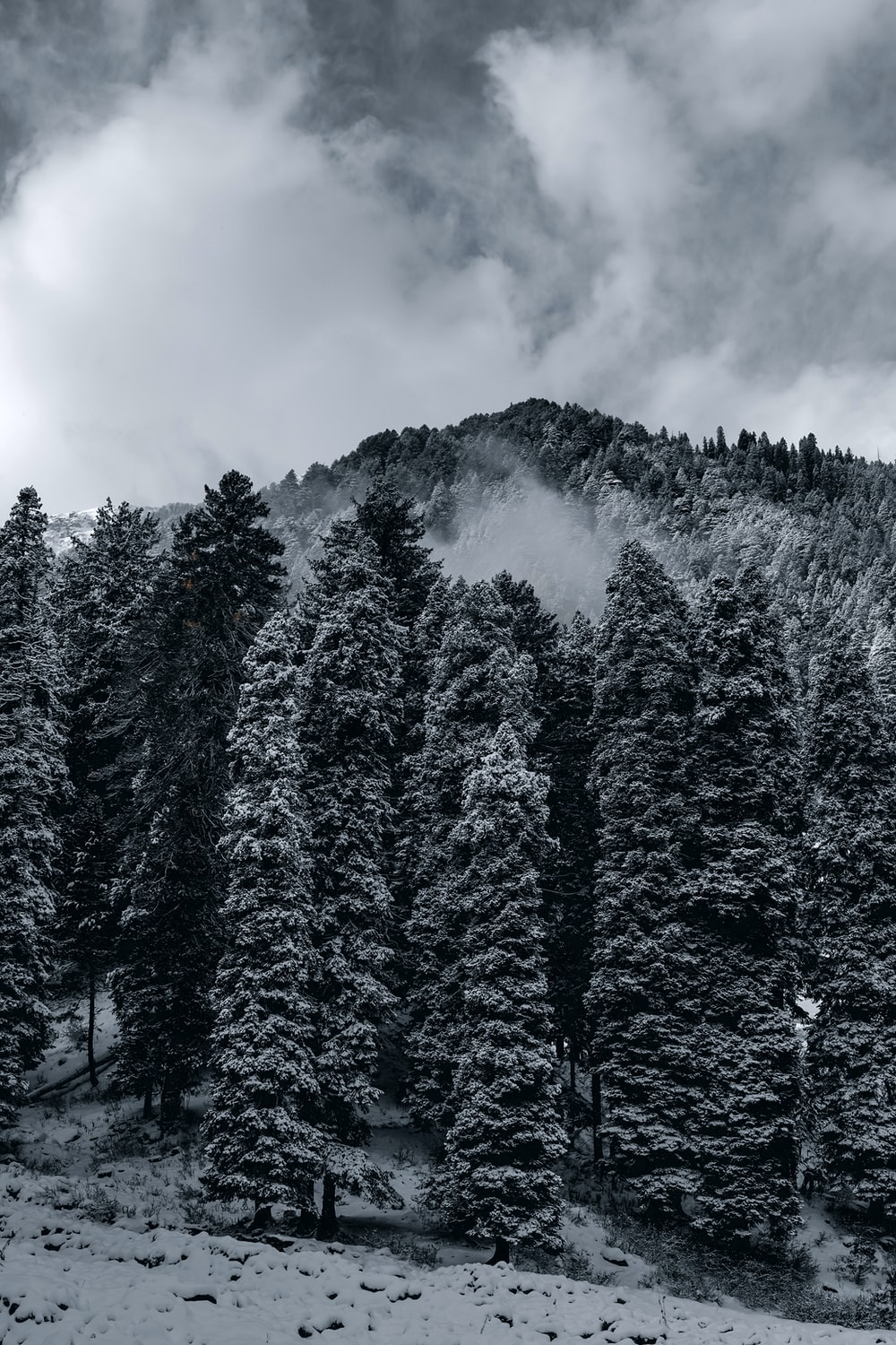 green pine trees under cloudy sky during daytime