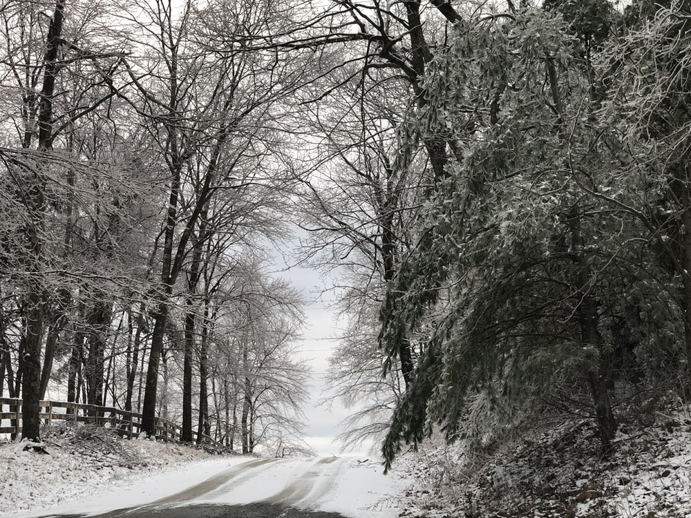 snow covered road between bare trees during daytime