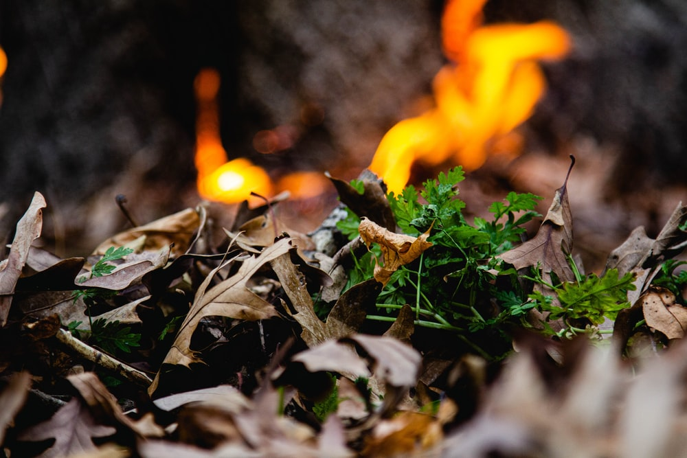 orange fire on brown dried leaves
